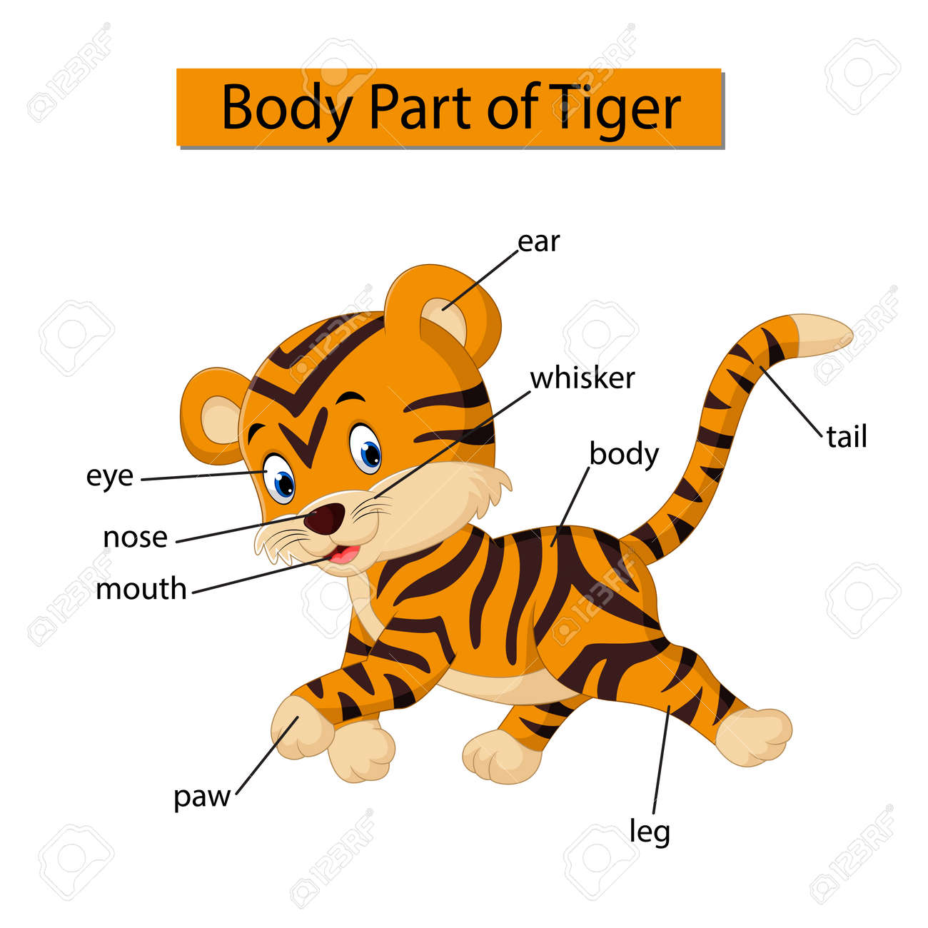 hight resolution of diagram showing body part of tiger stock photo 121266441