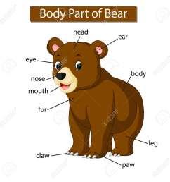 diagram showing body part of bear stock photo picture and royaltydiagram showing body part of [ 1300 x 1300 Pixel ]