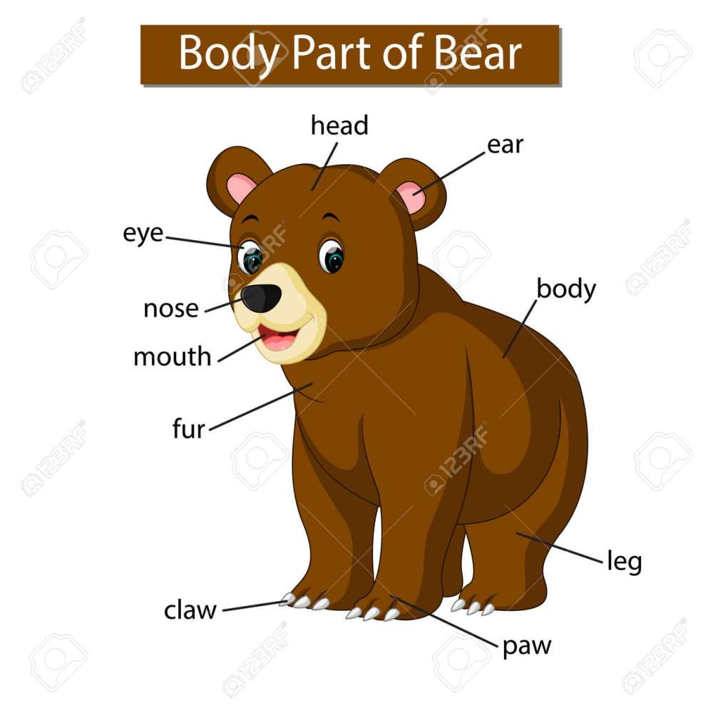 medium resolution of diagram showing body part of bear stock photo picture and royaltydiagram showing body part of