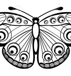 beautiful black and white butterfly isolated on white stock vector 18276275 [ 1300 x 737 Pixel ]