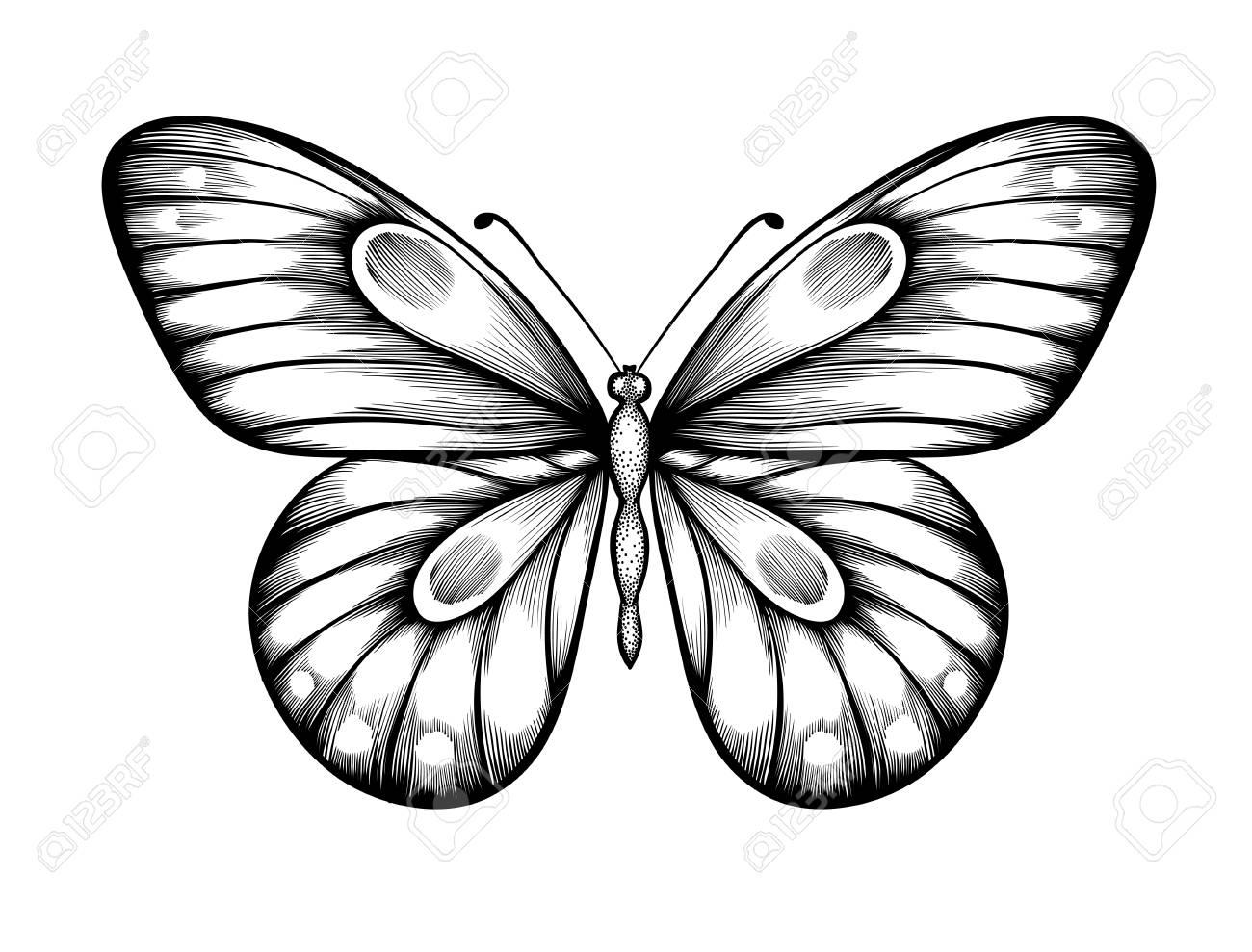 beau papillon noir et blanc lignes et des traits de contour dessine a la main
