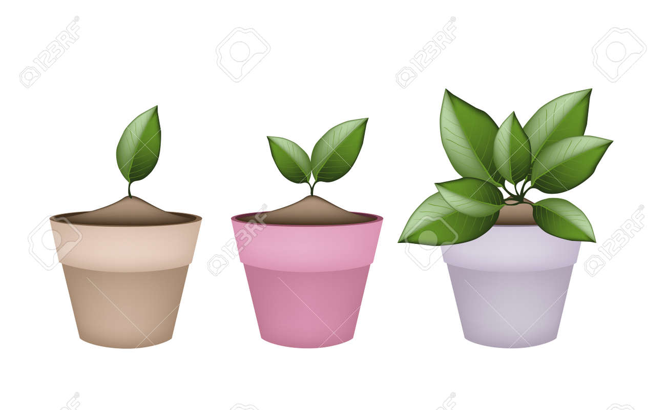 Houseplant Illustration Of Green Trees And Plants In Ceramic Royalty Free Cliparts Vectors And Stock Illustration Image 34327034