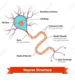 brain neuron cell diagram vector colorful illustration stock vector 49850027 [ 1300 x 1300 Pixel ]