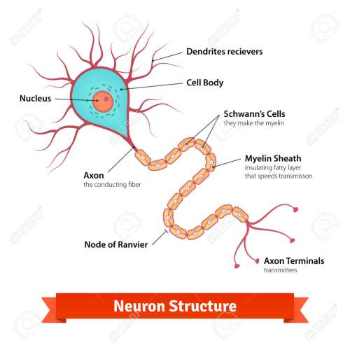 small resolution of brain neuron cell diagram vector colorful illustration stock vector 49850027