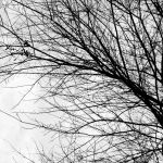 Branch Of Tree In Winter In Black And White Color Stock Photo Picture And Royalty Free Image Image 20226728