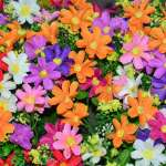 Beautiful Colorful Flowers Background Stock Photo Picture And Royalty Free Image Image 59013697