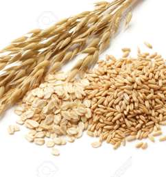 oats avena with its processed and unprocessed grains stock photo 15794754 [ 1300 x 866 Pixel ]