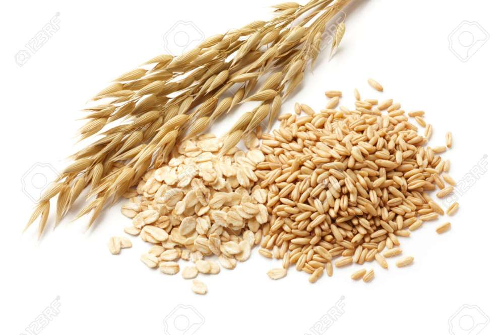 medium resolution of oats avena with its processed and unprocessed grains stock photo 15794754