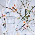 Wedding Decor White And Green Tree Branch With Blossoming Buds Stock Photo Picture And Royalty Free Image Image 86794475
