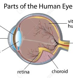 of parts of the human eye real human eye parts [ 1300 x 892 Pixel ]