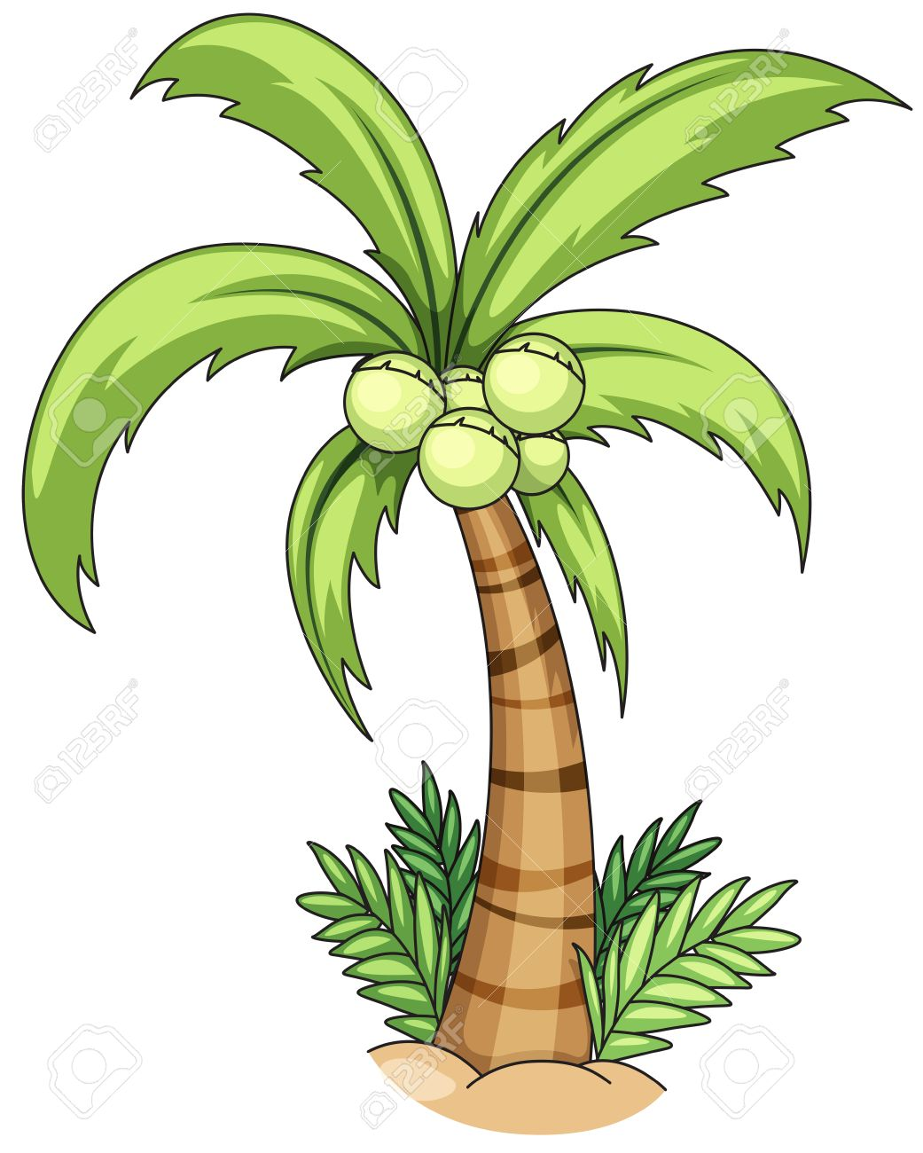 hight resolution of closeup single coconut tree with coconuts stock vector 40068903