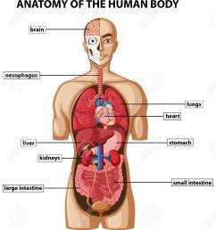 human body diagram wiring diagrams img rh 35 andreas bolz de paste for bed sores pressure sore diagram [ 1190 x 1300 Pixel ]