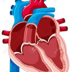 Heart Diagram Inside Mazda 626 Wiring Showing Of Human Illustration Royalty Free Stock Vector 61462153
