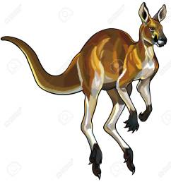red kangaroo i motion isolated on white background stock vector 23013589 [ 1230 x 1300 Pixel ]