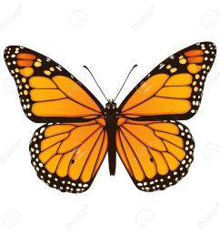 vector illustration of hand drawn monarch butterfly isolated on white background [ 1300 x 1300 Pixel ]