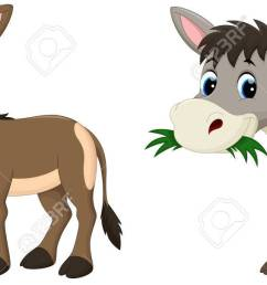funny donkey eating grass stock vector 56063507 [ 1300 x 606 Pixel ]