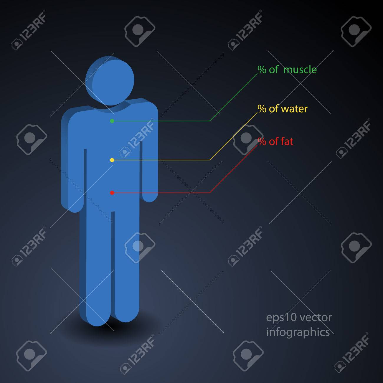 hight resolution of simple infographic about percentage of muscle water and fat in human body stock photo