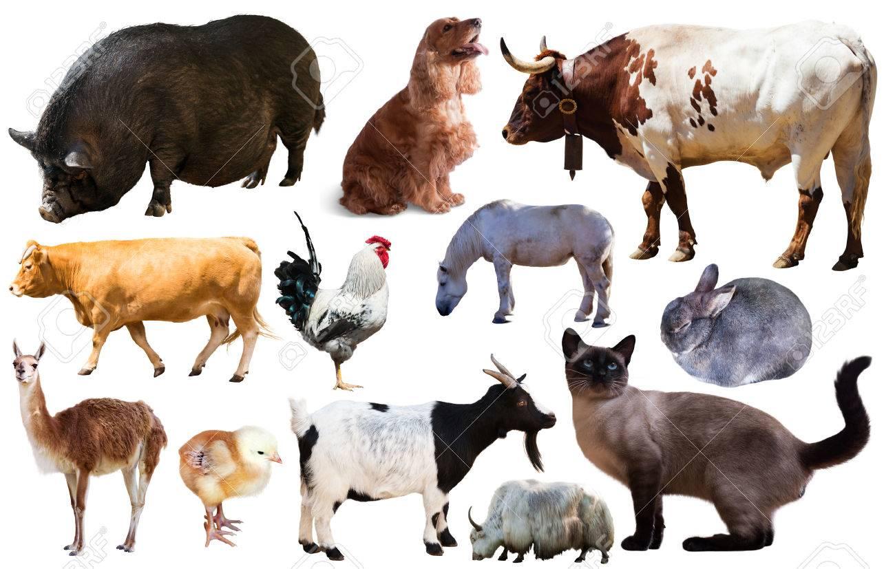 colección de animales de
