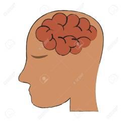 Inside Skull Diagram Shakespeare Globe Theatre Labeled Human Brain Head Icon Image Vector Illustration Design Stock 90650465