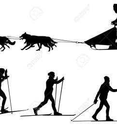 cross country skiing and dog sledding sport silhouette team of dogs stock vector 52467215 [ 1300 x 975 Pixel ]
