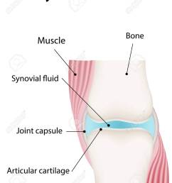 synovial joint labeled diagram stock vector 31325763 [ 1055 x 1300 Pixel ]