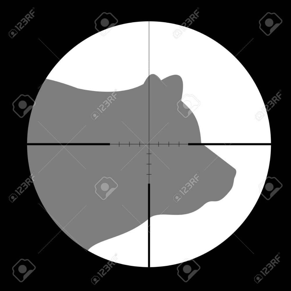 medium resolution of hunting season with bear in gun sight stock vector 51857936