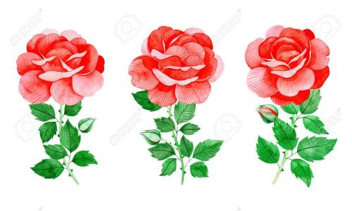 small resolution of handpainted watercolor beautiful roses 3 lovely clipart isolated can be used for your project