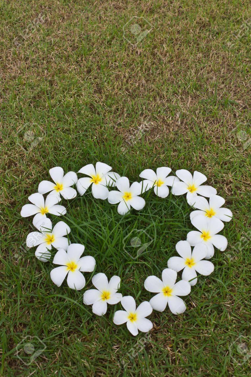 lan thom white heart