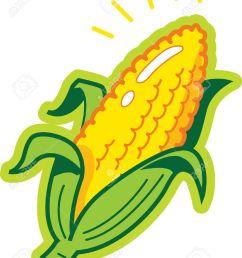 ear of corn stock vector 20687008 [ 1028 x 1300 Pixel ]