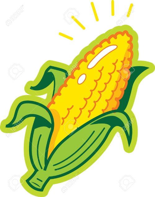 small resolution of ear of corn stock vector 20687008