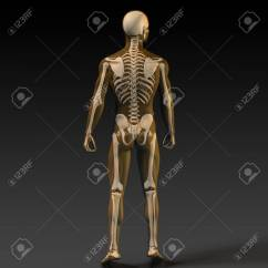 Human Bone Structure Diagram Mitosis Of An Animal Cell In Orange And Black Stock Photo 58542167