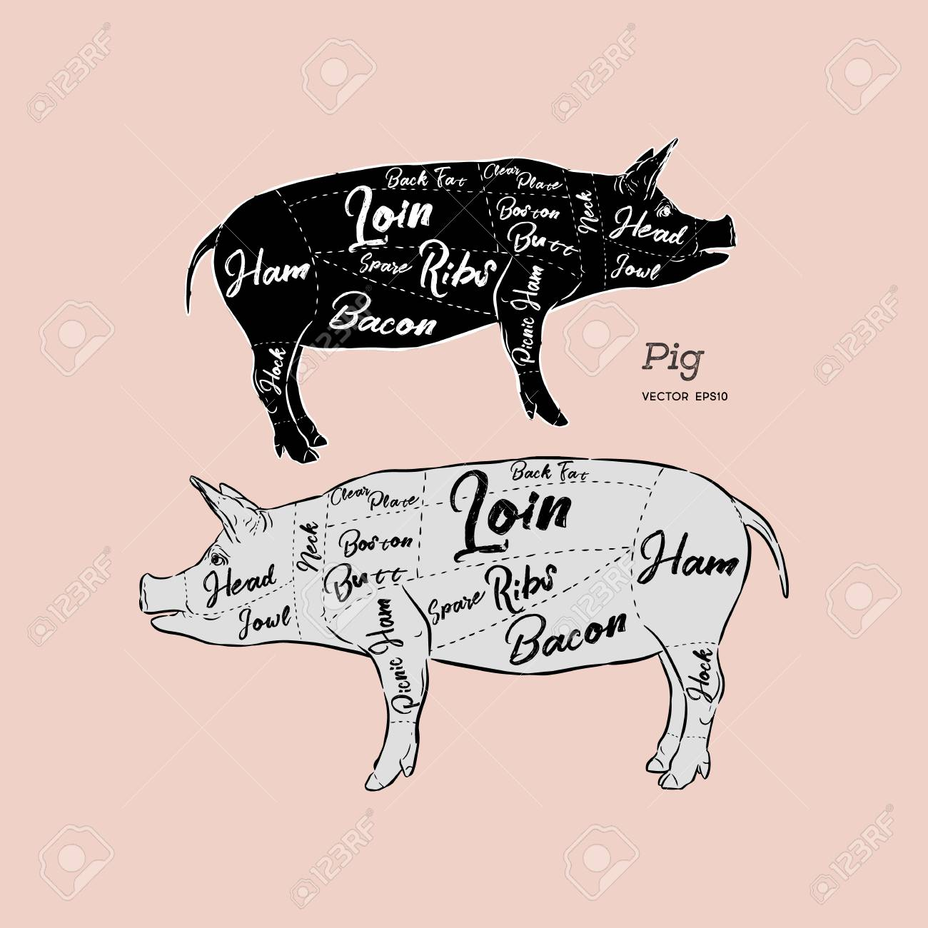 hight resolution of cut of meat set poster butcher diagram scheme and guide pork vintage