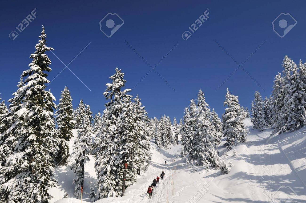 Das skigebiet mt seymour befindet sich an der westküste british columbias, nahe der stadt north vancouver. Snow Covered Mount Seymour Park North Vancouver Stock Photo Picture And Royalty Free Image Image 4622040