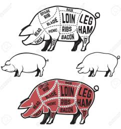 butcher diagram scheme and guide pork cuts set of pig silhouettes isolated on [ 1300 x 1300 Pixel ]