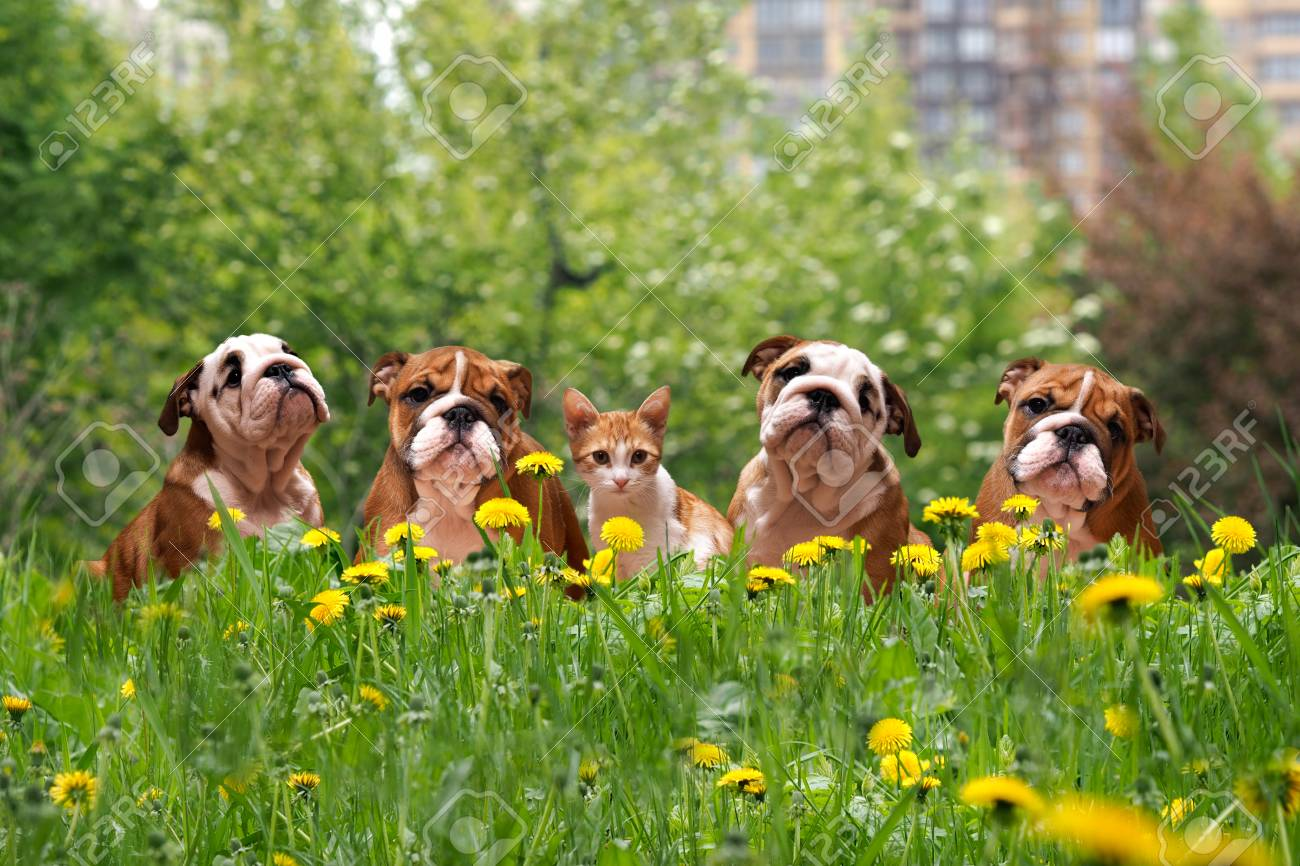 Cute Dogs And Cats In The Tall Grass Among The Dandelions English Stock Photo Picture And Royalty Free Image Image 65751070