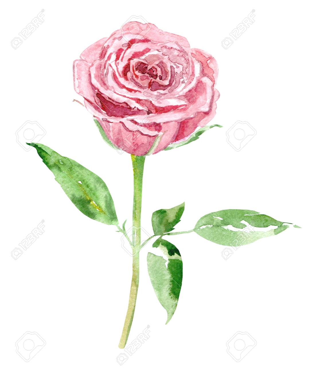 cute pink rose on