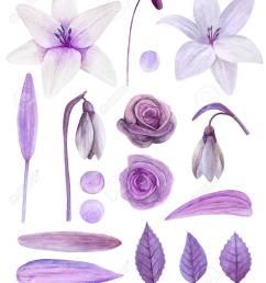 purple flowers clipart watercolor lilac floral bouquet clip art stock photo 96670919 [ 1078 x 1300 Pixel ]
