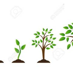 illustration tree growth diagram with green leaf nature plant set of illustrations with phases plant growth flat style  [ 1300 x 674 Pixel ]
