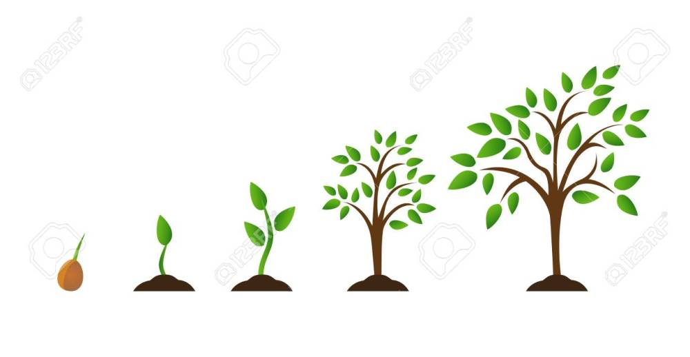 medium resolution of illustration tree growth diagram with green leaf nature plant set of illustrations with phases plant growth flat style