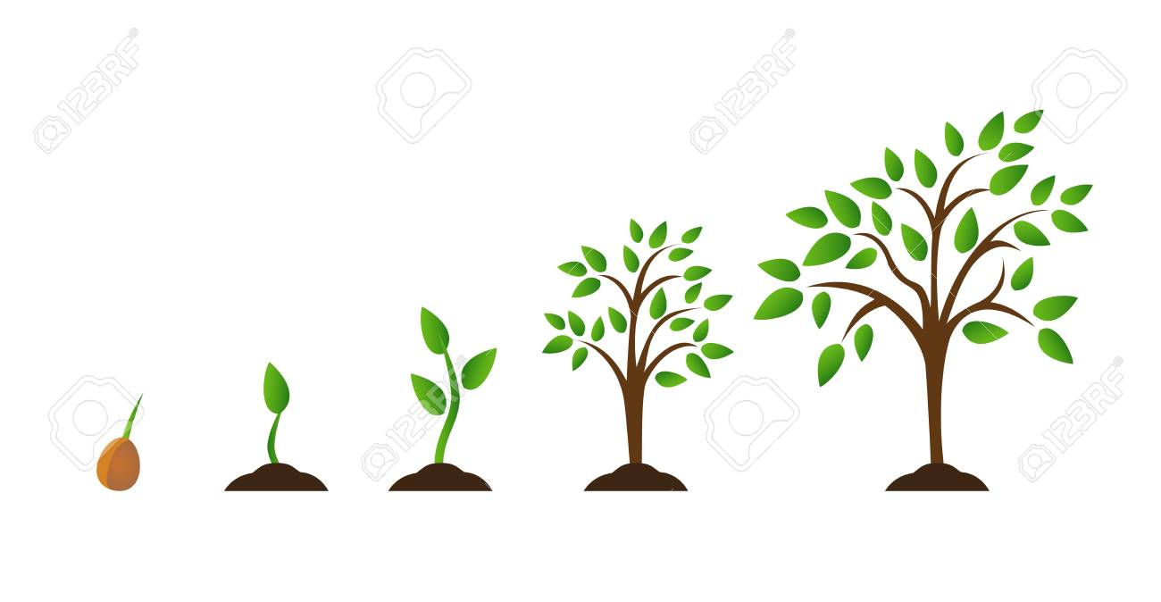 hight resolution of illustration tree growth diagram with green leaf nature plant set of illustrations with phases plant growth flat style