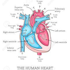 Realistic Heart Diagram Motor Capacitor Wiring Hand Drawn Illustration Of Human Anatomy Educational Showing Blood Flow With Main Parts