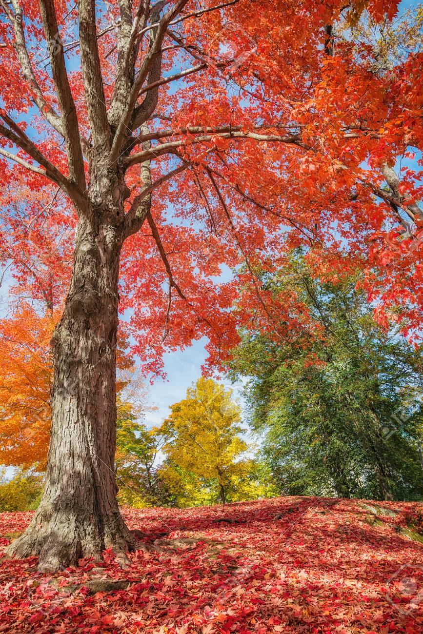 colorful autumn trees at