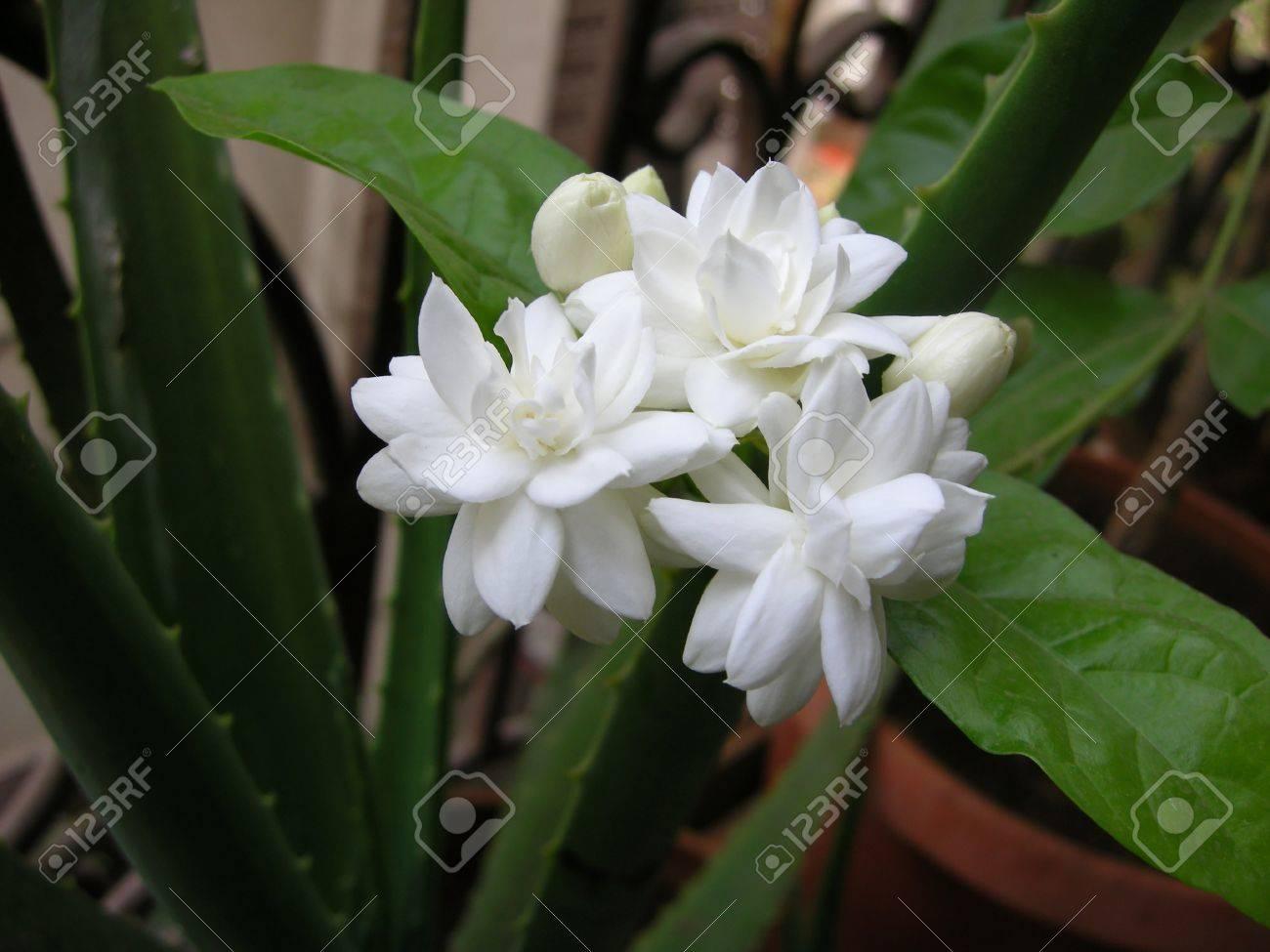Une Belle Fleur Blanche