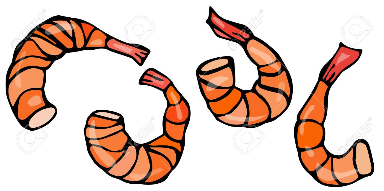 hight resolution of vector seafood prawn realistic illustration stock vector 77690067