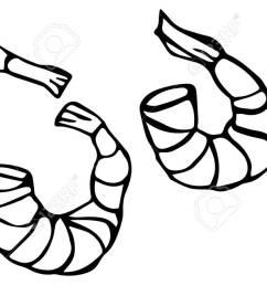 vector seafood prawn realistic illustration stock vector 77690068 [ 1300 x 649 Pixel ]
