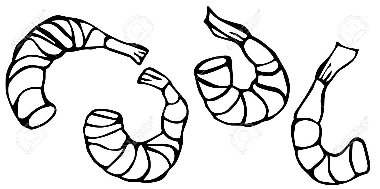 hight resolution of vector seafood prawn realistic illustration stock vector 77690068
