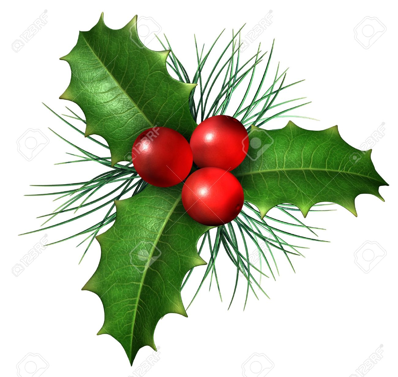 christmas holly with with