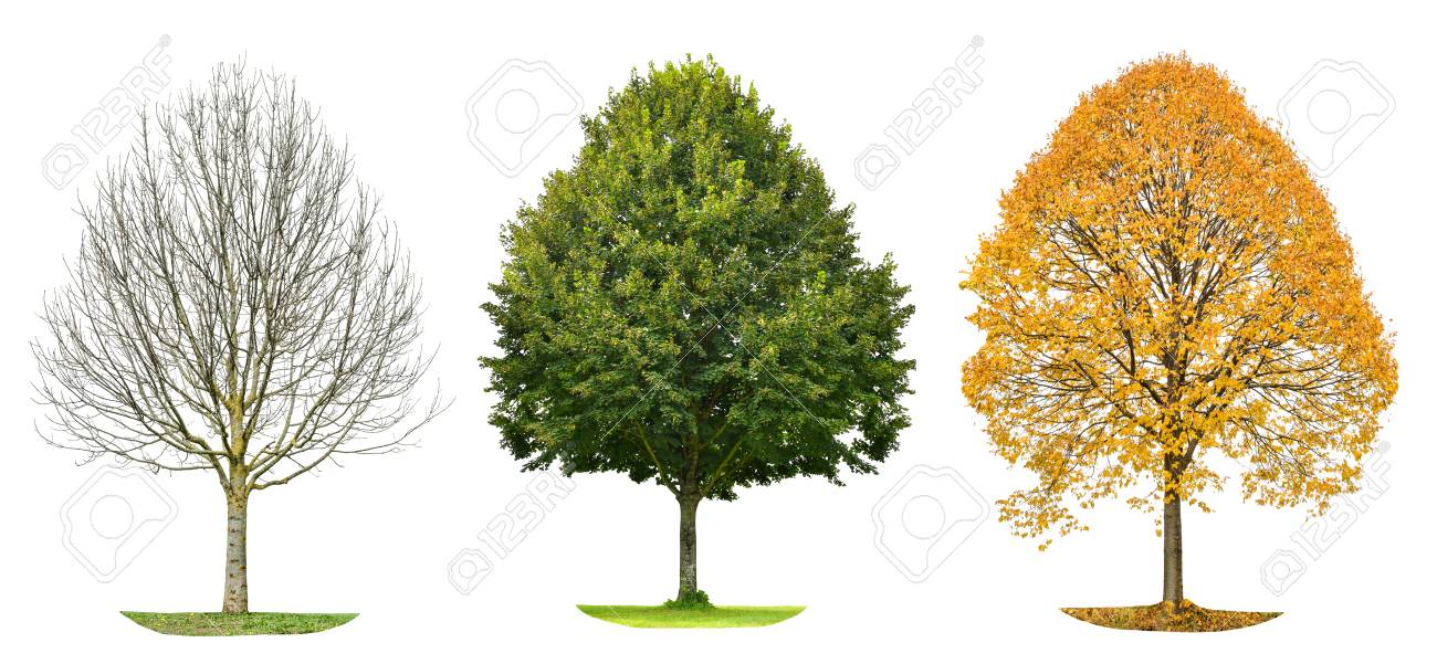 silhouette d arbre isole sur fond blanc printemps ete automne banque d images et photos libres de droits image 76877152