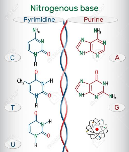 small resolution of chemical structural formulas of purine and pyrimidine nitrogenous bases adenine a ade guanine g gua thymine t thy uracil u cytosine c