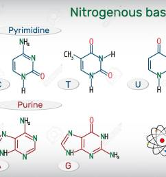 chemical structural formulas of purine and pyrimidine nitrogenous bases adenine a ade guanine g gua thymine t thy uracil u cytosine c  [ 1300 x 1102 Pixel ]